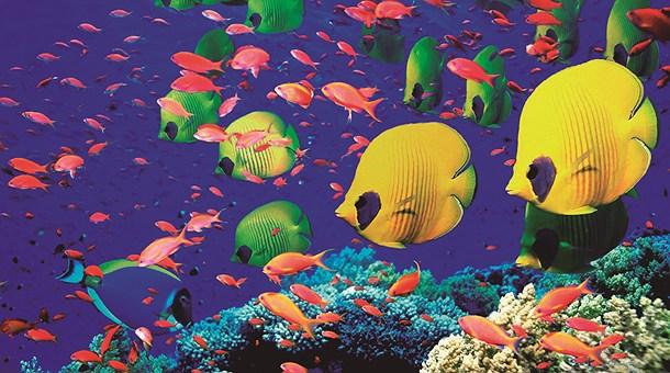 buceo-en-mar-rojo