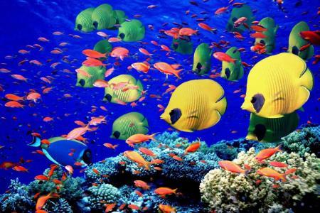 buceo-en-mar-rojo02