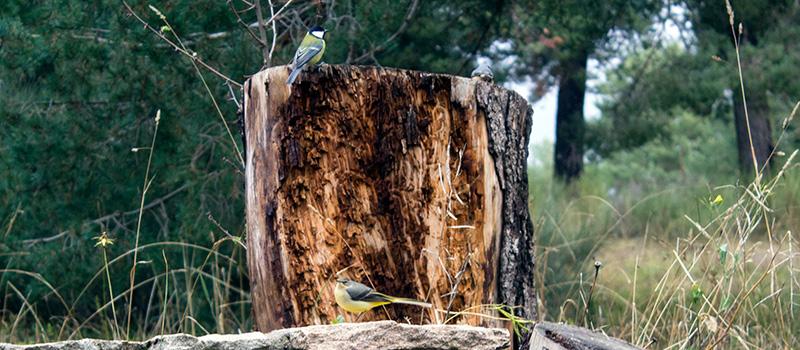 Ornitología Gredos