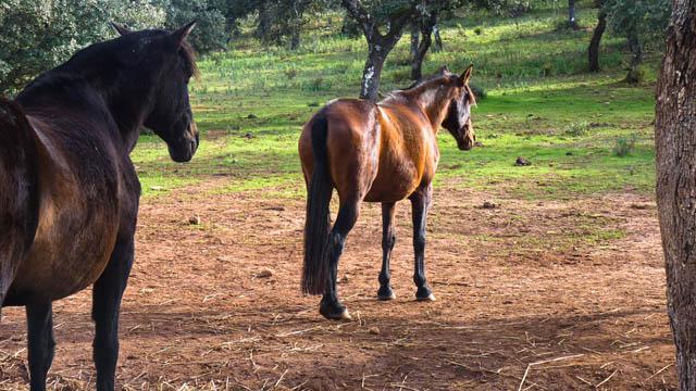 caballos-reservatauro