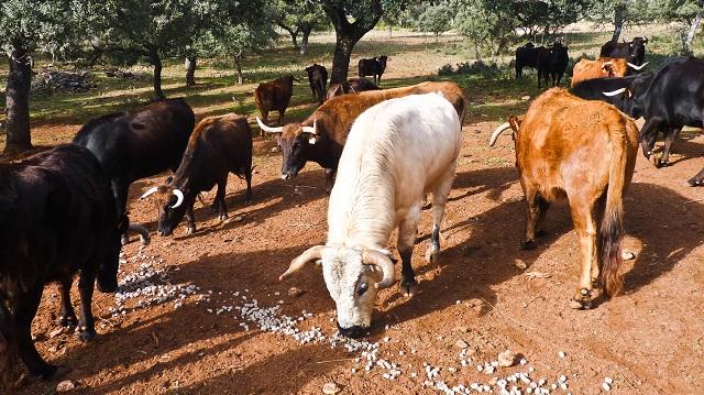 vacas-reservatauro